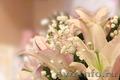 Видеосъемка свадеб и иных торжеств и мероприятий